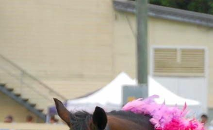 Tweed Valley Equestrian Group will hold a pink dressage day this weekend.