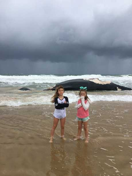 HAVING A LOOK: Maya and Mia Carvell checked out the whale carcass at Wurtulla.
