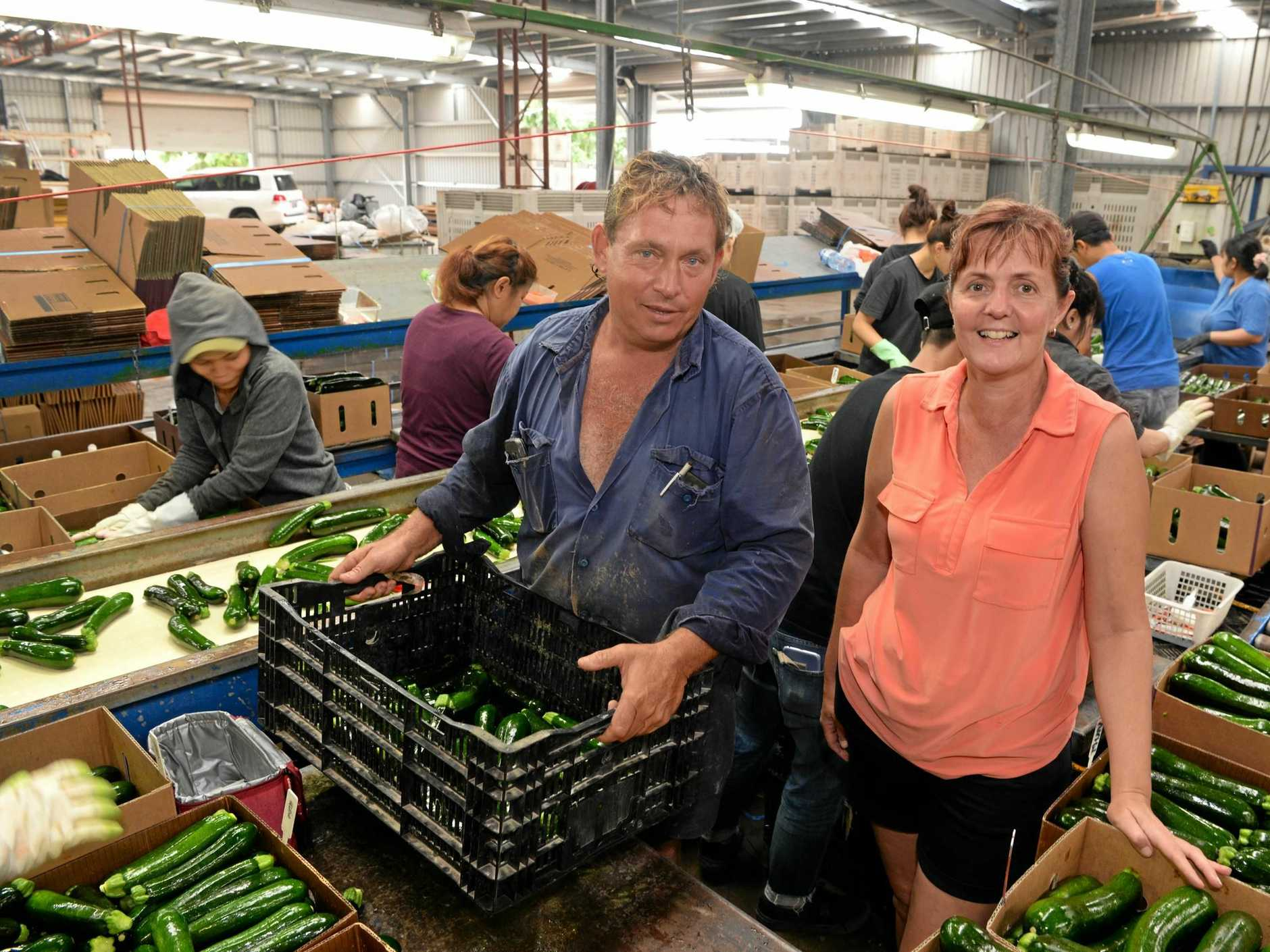 Trevor and Wendy Cross donate about 1300 tonnes of vegetables and fruits to Foodbank each year. The produce is given to Australians who cannot afford to buy food.