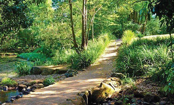 Tucki Tucki Creek in Goonellabah is one of many walking tracks in Lismore that people can explore.