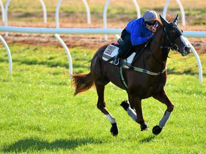 FORM HORSE: Craig Williams riding Admire Deus during a trackwork session at Werribee