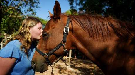 Horse owner Jessica Adams gives Hollywood Hitman some love after he was found with a bolt wound.