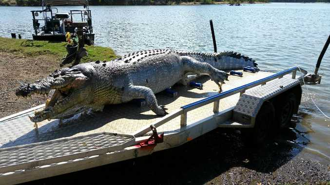 Investigations are ongoing into the death of a 5.2m crocodile found shot in the Fitzroy River, Rockhampton last month.