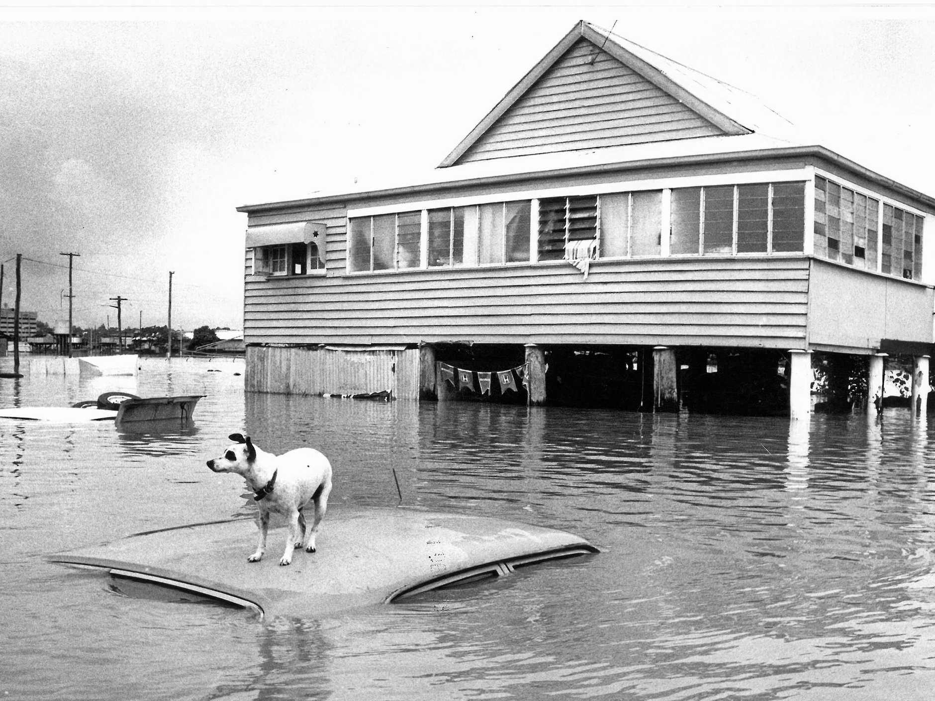 File image from Rockhampton Floods in 1991. Car submerged in Bolsover Street, Depot Hill.