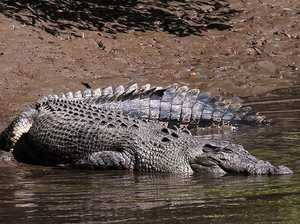 Was it a crocodile or a bit of driftwood in the Mary River?