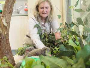 Australia Zoo's trauma season
