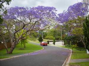 Jacarandas in bloom in Jarrett Street near Promenade
