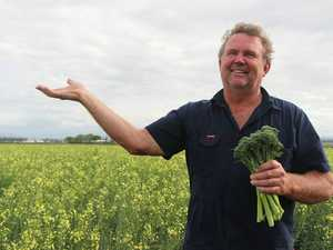 Rain a mixed blessing for Lockyer Valley growers