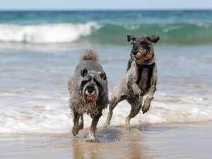 Popular Coast dog beach could be slashed