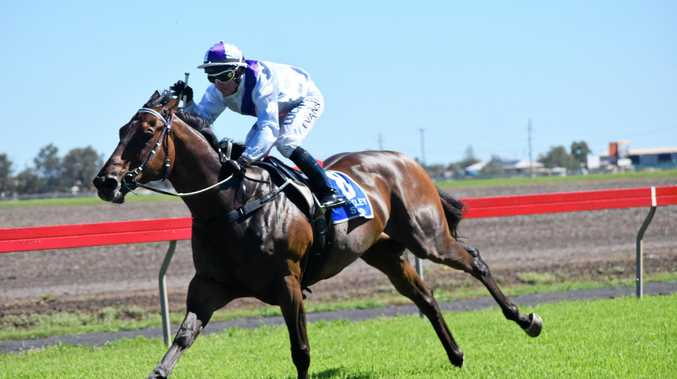 Toowoomba eight-year-old Sun Will Shine chases back-to-back Stanthorpe Cup wins at Armstrong Park tomorrow.