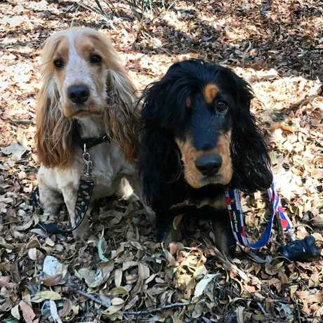 Mia (left) and Billie on a walk at Lake Apex in Gatton.
