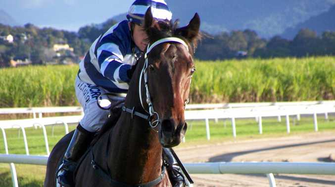 Bernie of Babylon ridden by Jason Taylor returns to scale. Photo Contributed