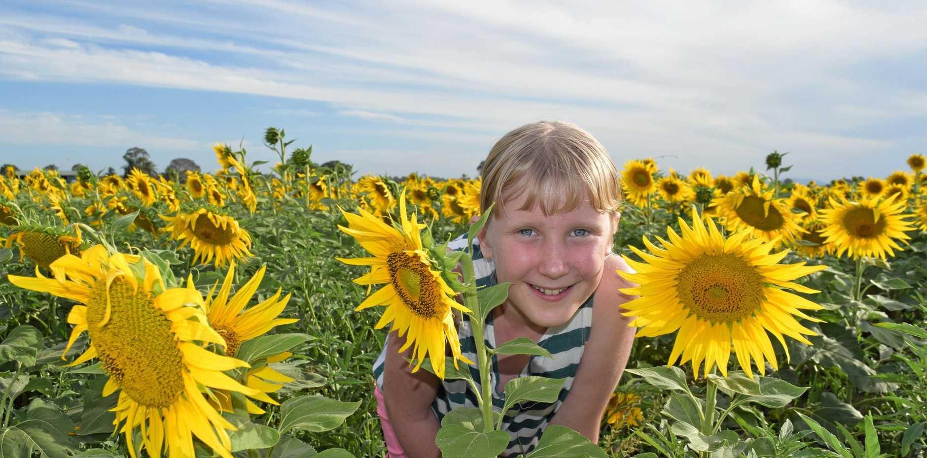 Paige Humphrey in a sunflower field outside Casino.
