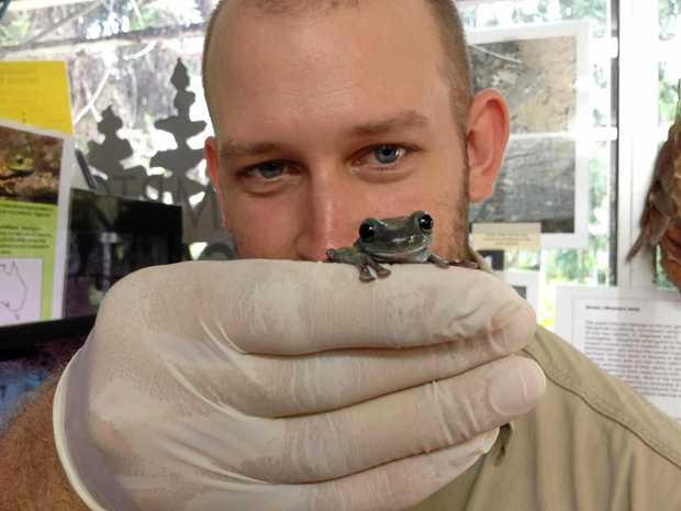 RIBBIT: Bundaberg Regional Council zoo officer David Flack will be hosting a frog identification workshop.