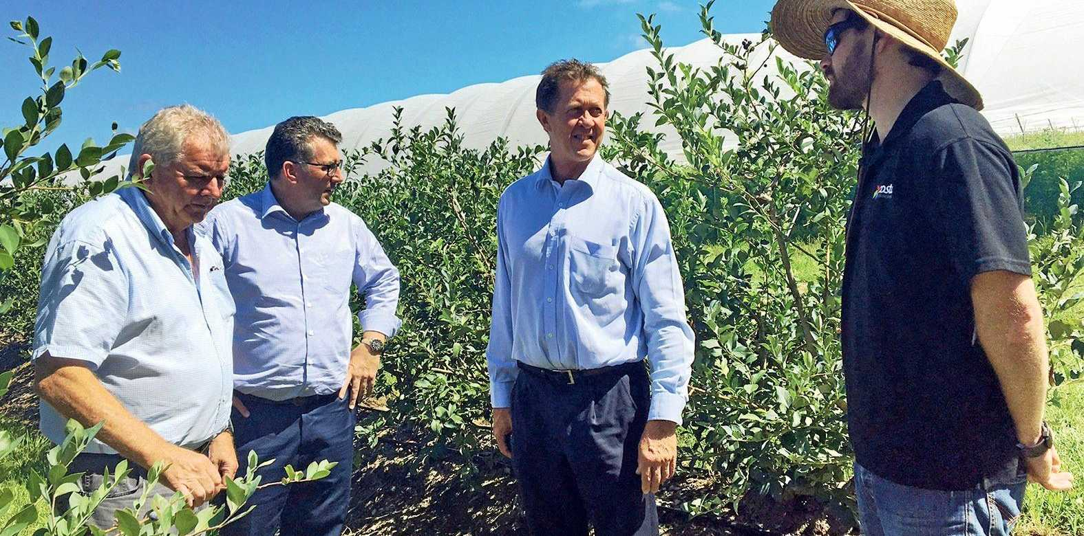 Access to the Chinese market will be a massive driver of growth for the Mid North Coast agriculture sector - which supplies 75% of Australian blueberries.