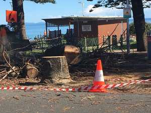 Byron Bay tree cut down