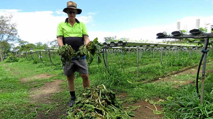 WEATHER: Stephen Richards with a small portion of his lost greens, which were exposed to extreme heat then heavy rain.