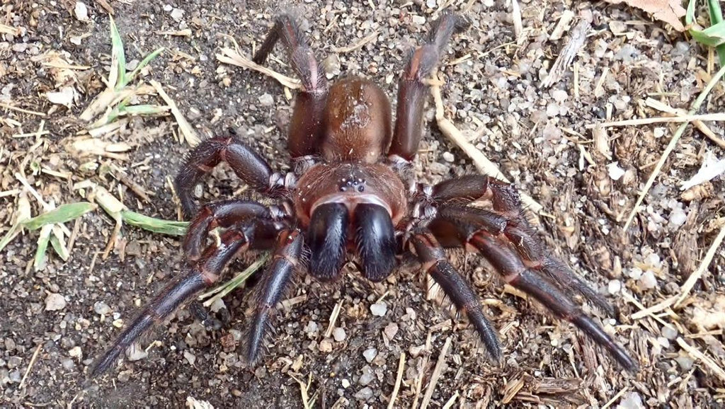 Charlie Spagalli was at a gathering in Maidenwell when he came across this huge spider.