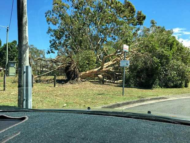 STRONG winds to 90 kmh are expected to buffet the Sunshine Coast as a series of fast moving storms push through the region.