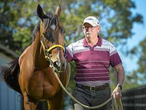 WATCH: Horse trainer confident for Cox Plate Day