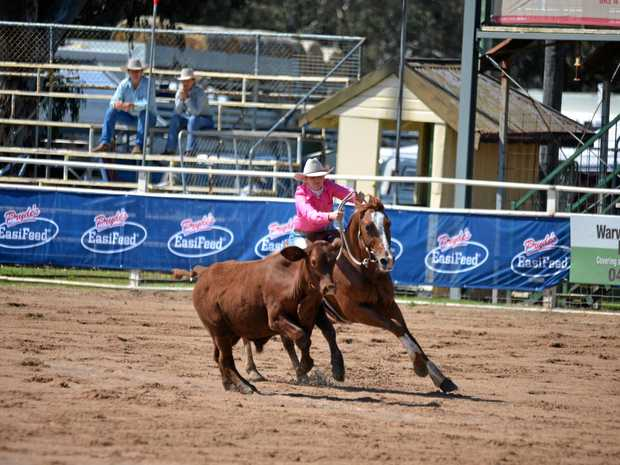 FIRST RUN: Brisbane rider Andrea Davy and Lethal Playboy in first round campdraft action at the Warwick Rodeo.