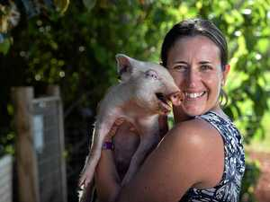 Cuteness overload: Meet the Coast's Pop-Up Piglet