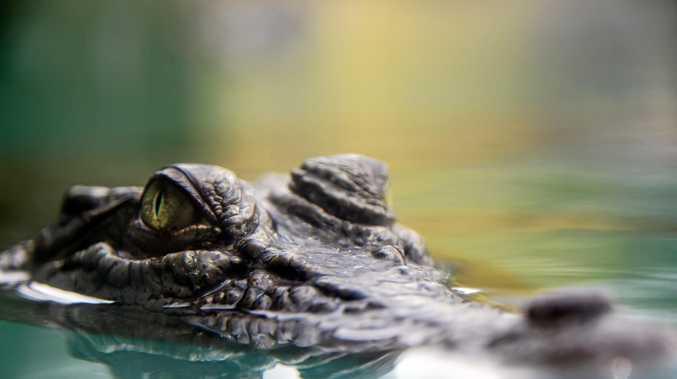 Confirmed crocodile sighting at a Mackay beach.