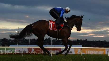 Winx is raring to go for Saturday's Cox Plate at Moonee Valley.