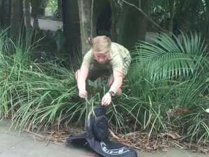 Robert Irwin catches snake at Australia Zoo.