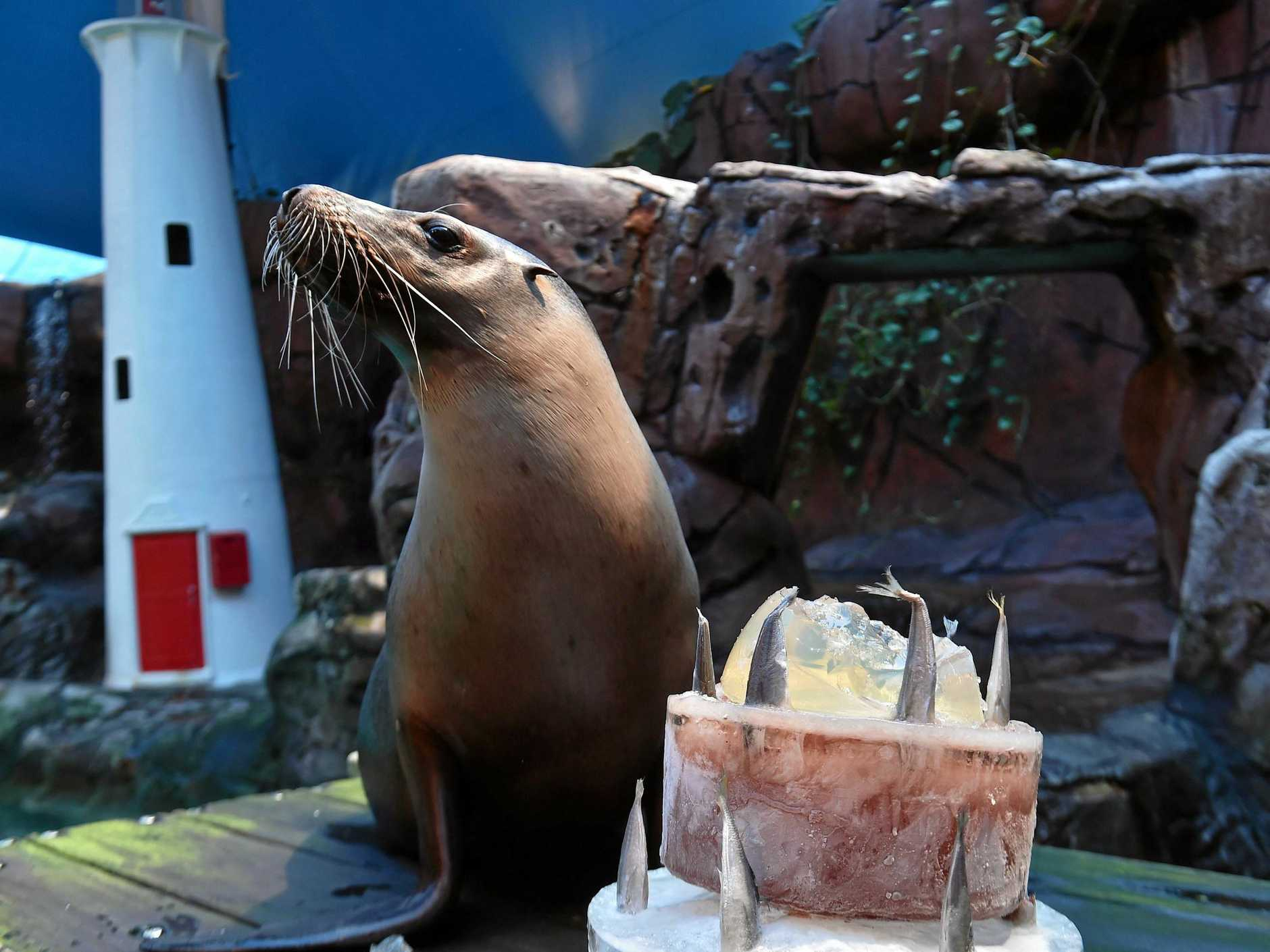 Portia the seal at Sea Life is celebrating her 28th Birthday.
