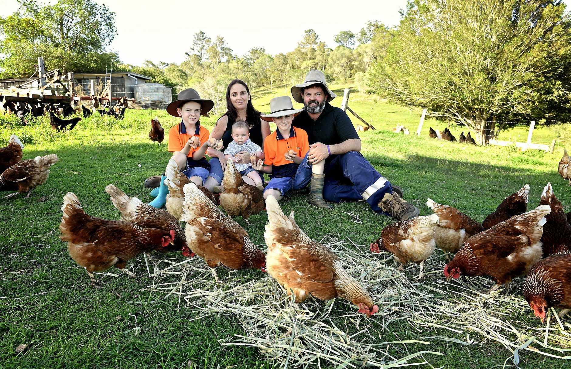 Elijah, Casey with baby William,  Lachlan and Bradley Holt on their free range chook farm at Glastonbury Gympie.
