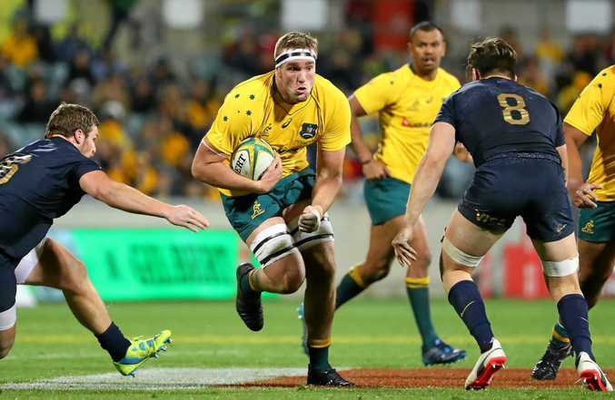 Former Evans Head/Lismore rugby junior Izack Rodda playing for the Wallabies against the Argentina Pumas last month. Shoulder surgery earlier this month has ruled Rodda out the Wallabies spring tour of Europe.
