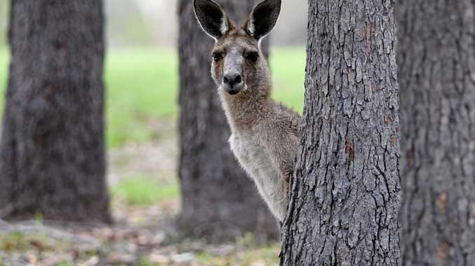 Road users are warned to be aware of wildlife after a spike in crashes involving kangaroos.