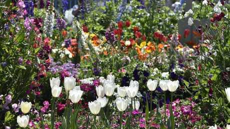 Queens Park. Carnival of flowers 2017. Spring. September