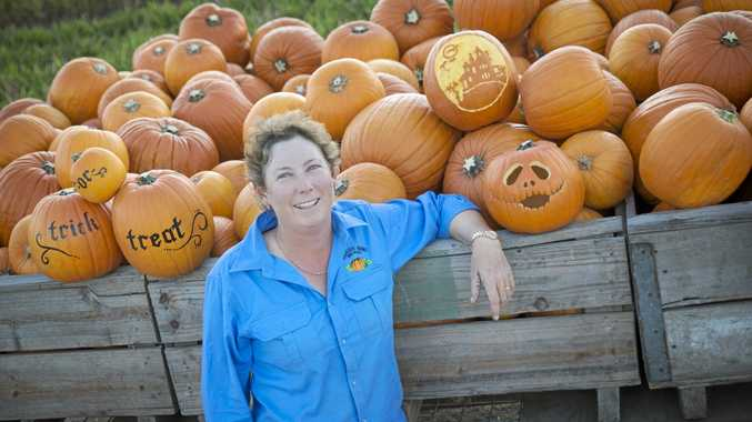 SPOOKY FARMING: Coles supplier for Halloween Belinda Williams has had a busy few weeks picking jack-o-lantern pumpkins.