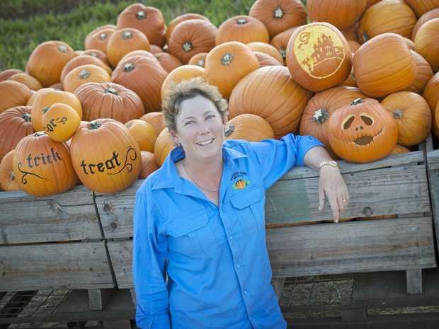 SPOOKY FARMING: Coles supplier for Halloween Belinda Williams has had a busy few weeks picking jack-o-lantern pumpkins.