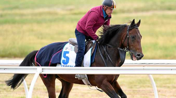 Melbourne Cup hope Tiberian during track work at Werribee Racecourse.