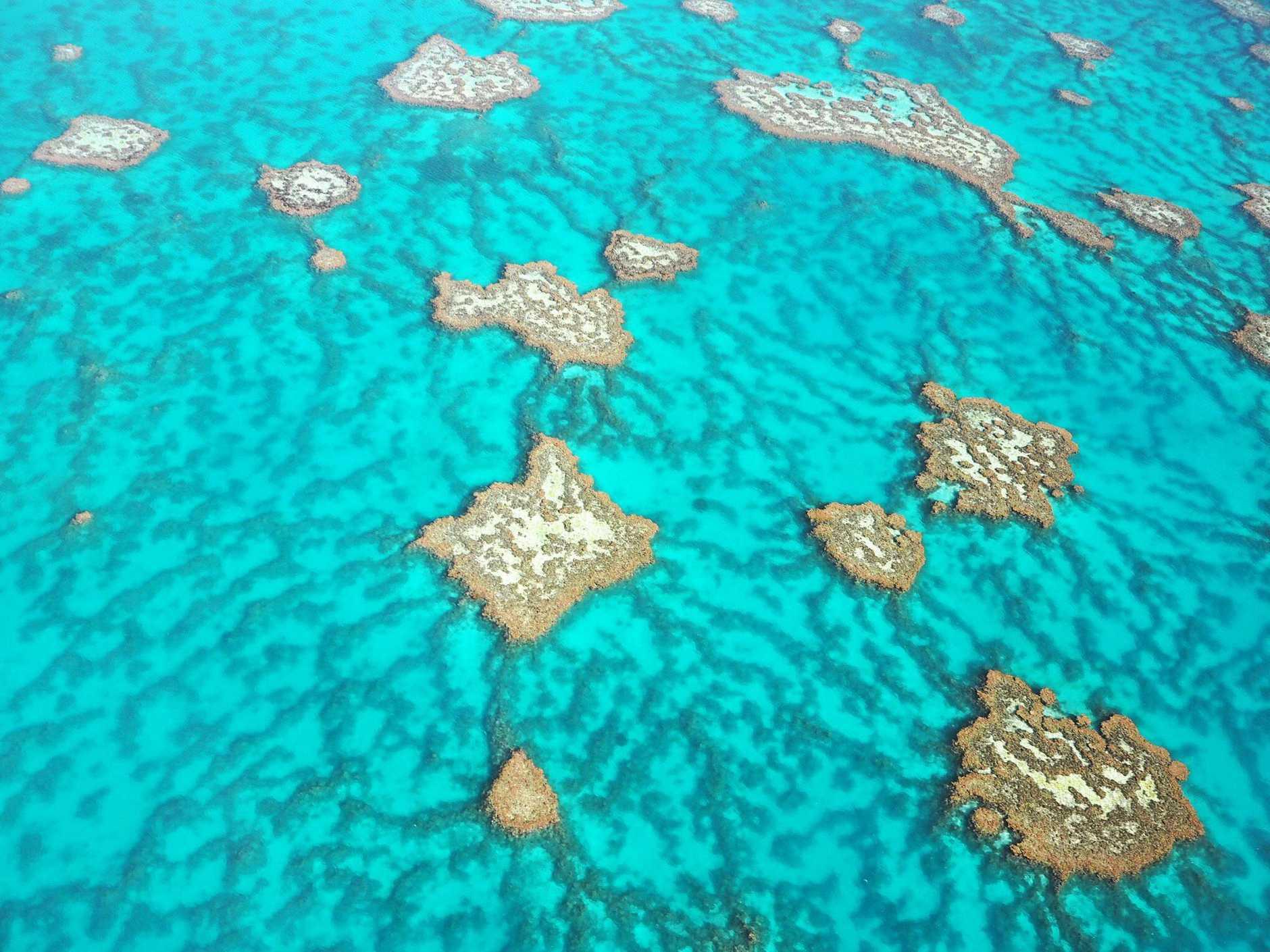 REEF REPORT: Australian Marine Conservation Society say