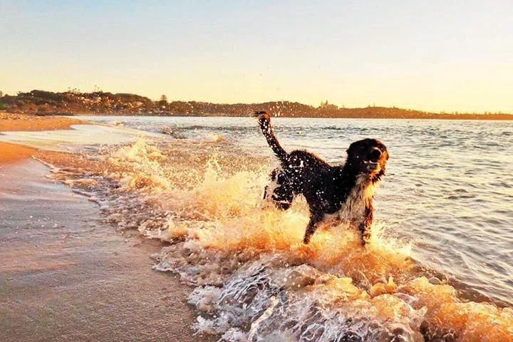 Happy pup, a beach and a sunset, photo by Fiona Gray.