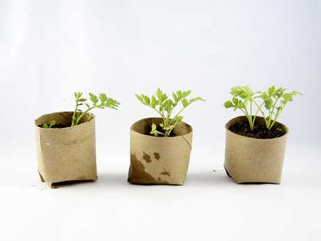 HOME RECYCLING IDEA: Using a old milk carton or cardboard roll, plant a tree seedling inside it.