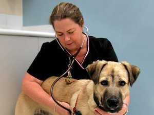 UQ Gatton's Trish Farry named vet nurse of year