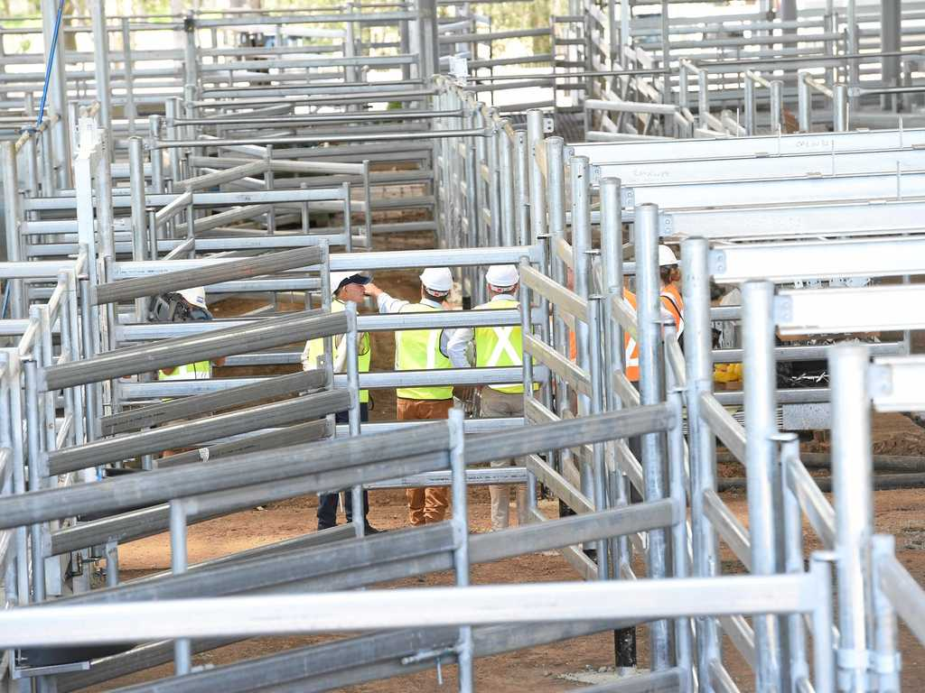 Interest is high in the $14 million upgrade of Casino's saleyards.