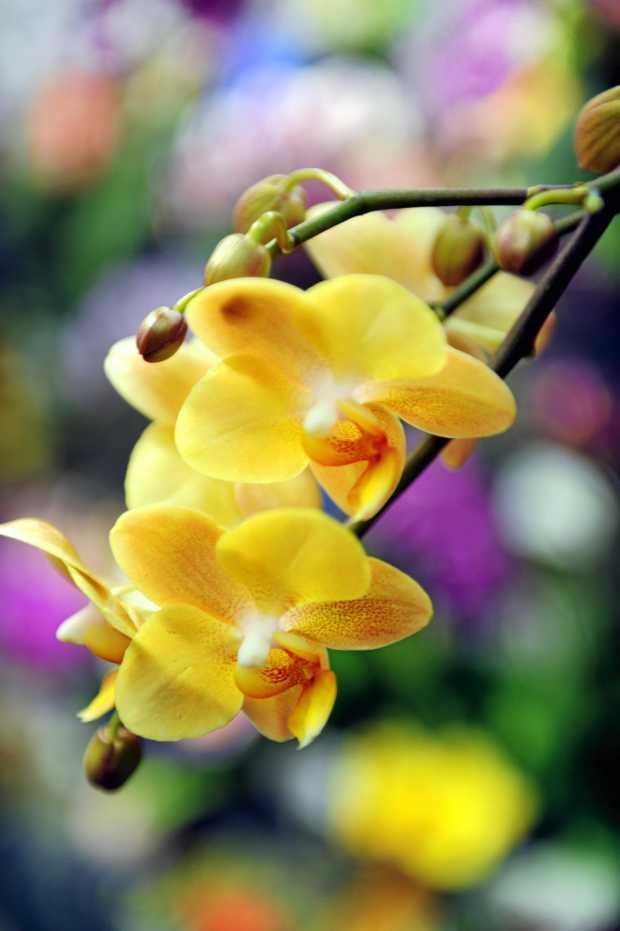 Hervey Bay Orchid Society -    Photo: Valerie Horton / Fraser Coast Chronicle