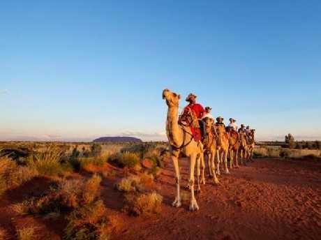 Uluru camel ride.