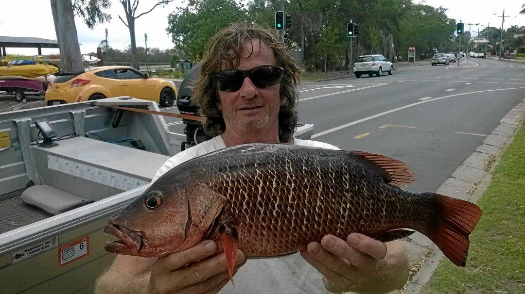 JEFF AND JACK: Jeff Vere with a nice mangrove jack taken from the upper reaches of Eudlo Creek on Wednesday.