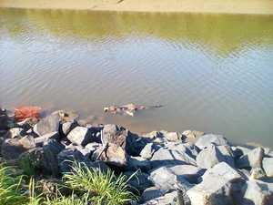 SHOCKING: Kangaroo killed, tied up and dumped in creek