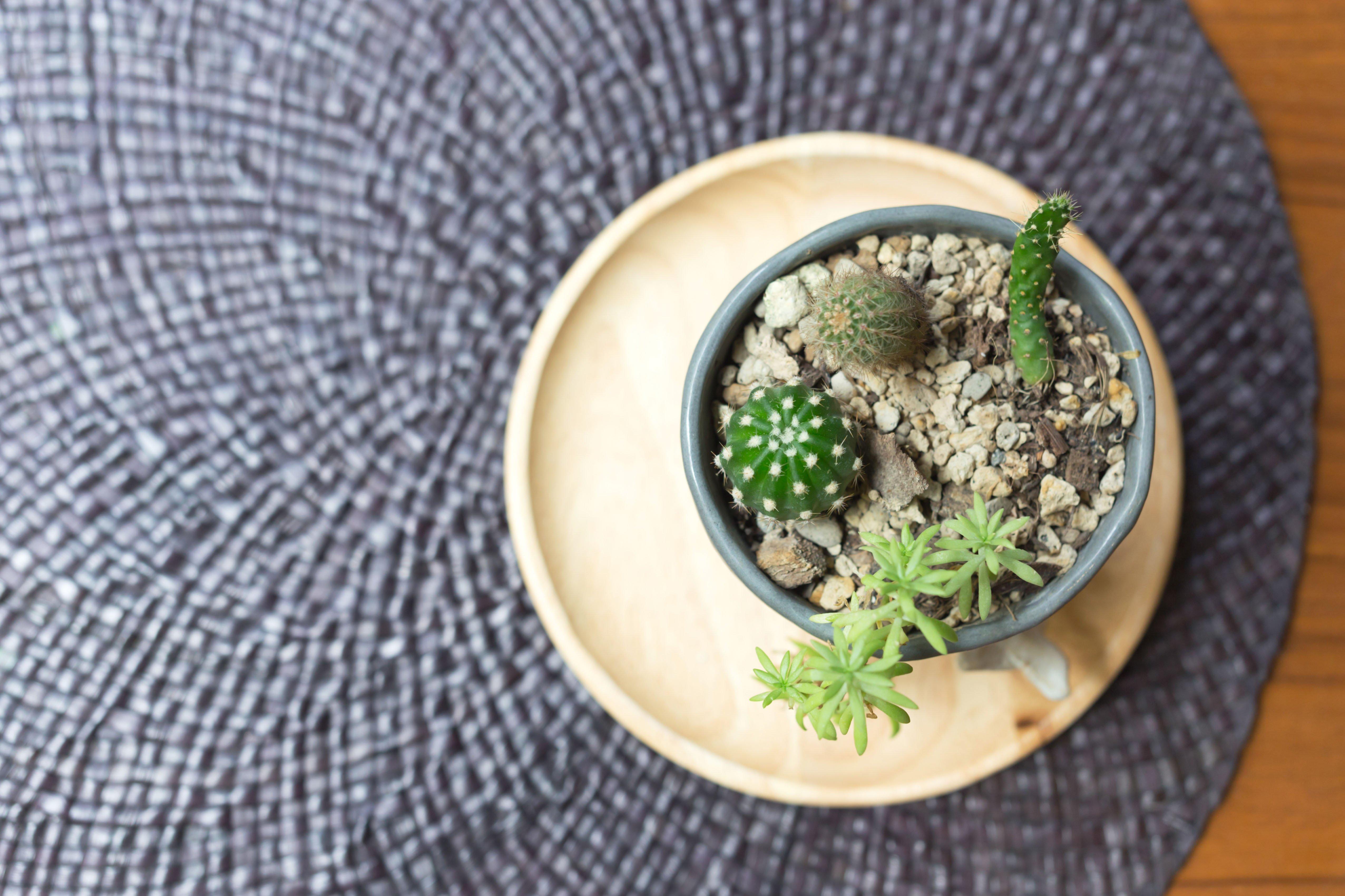 FAMILIAR FRIEND: Bring Home an Heirloom: Cactus