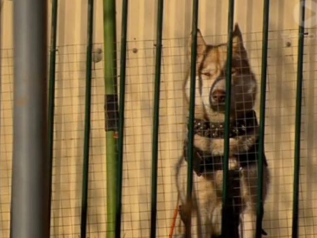 Joseph's uncle said the dogs at the Oberon home (above) were treated better than the three-year-old. Picture: Channel 10.