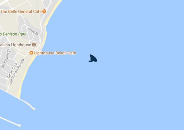 A tagged shark has been detected at Lighthouse Beach, Ballina.