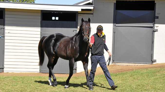 Eureka Stud stallion Spirit Of Boom with handler Angus McAlpine.